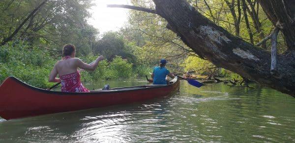 2021.07.10-11: Kenuval a Vadonban: A Szigetköz Dél-keleti Ágai