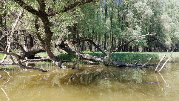 2021.05.22-24: A Gemenci-erdő Felfedezése a Veránka Szigetről fürge Túrakenukkal